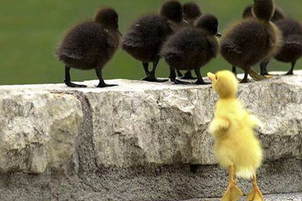 Little Duckling Left Out